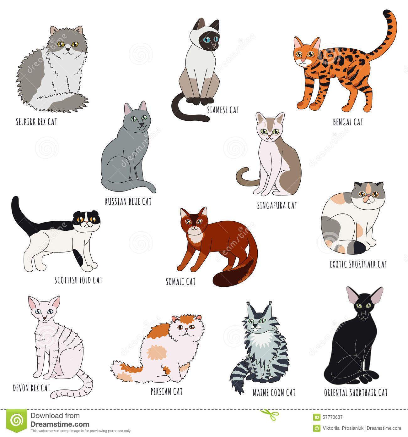 Sentence Structure N+is+Adj Cartoon styles, Cat breeds