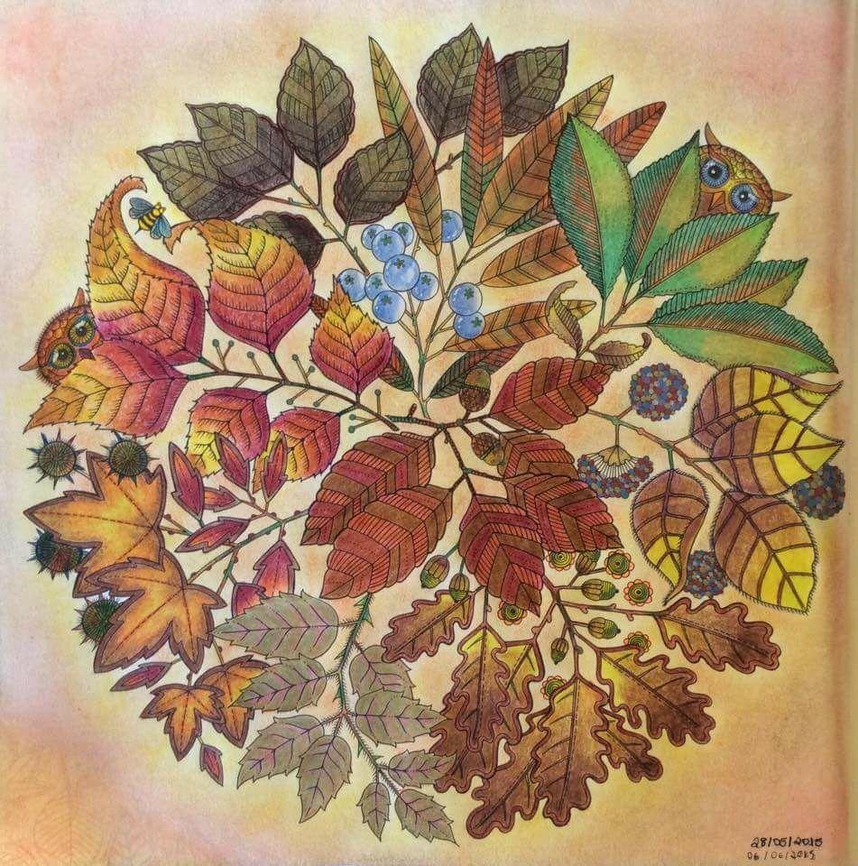 Mandala Owls Secret Garden De Corujas Jardim Secreto Johanna Basford Coloring BooksAdult