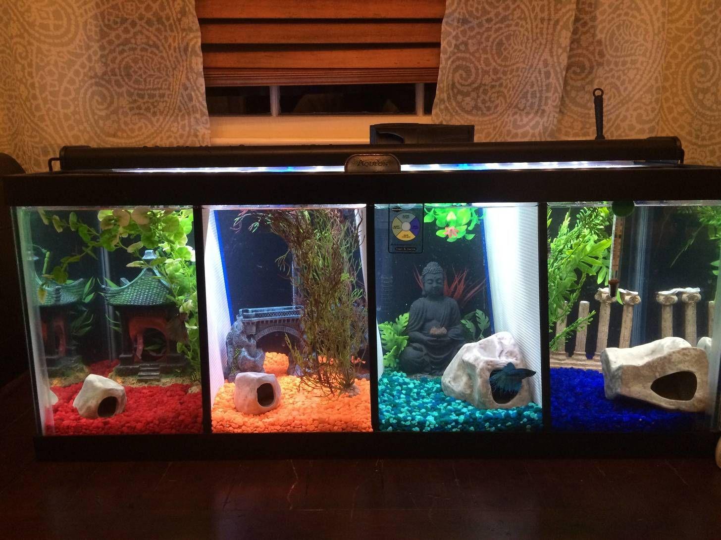 Four Section Betta Tank Betta Fish Tank Cool Fish Tanks Betta Tank