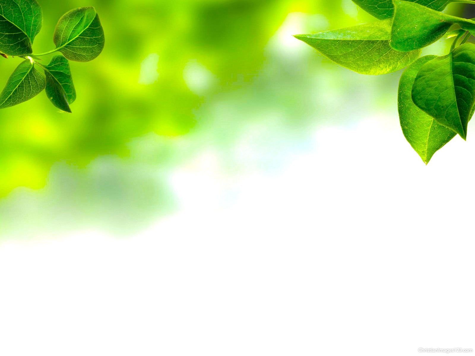 Leaves Background For Powerpoint Free Christian Images Art In