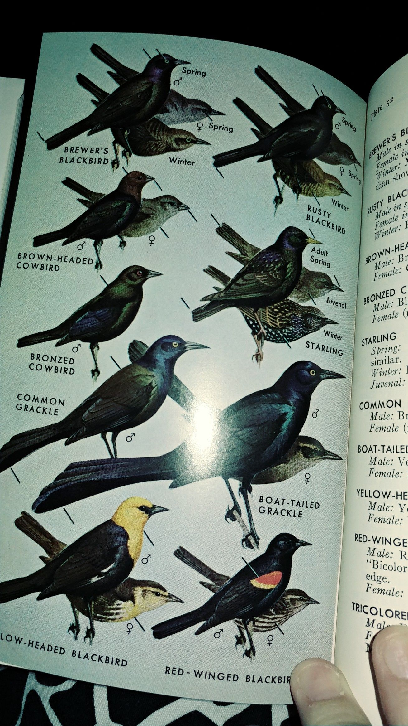 pin by melissa mcclintock on backyard birds pinterest
