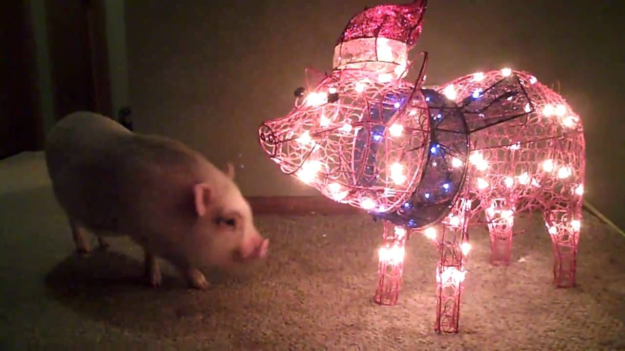 maxresdefault cute little piggies pinterest christmas lights