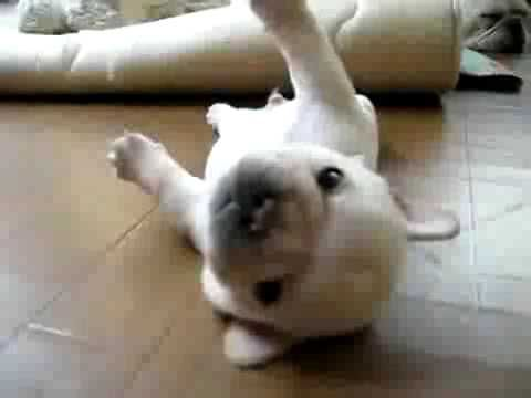 This Puppy Who Can T Get Up Little Puppies Cute Animals