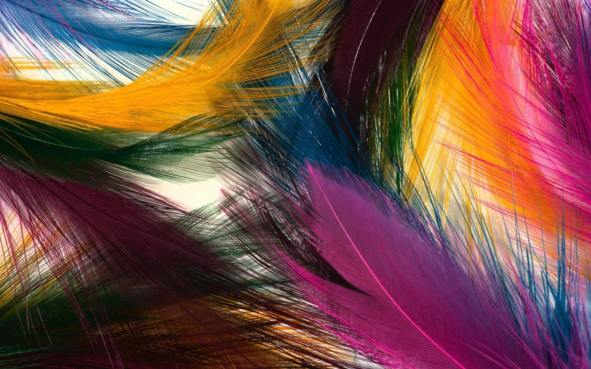 Abstract Colorful Feathers Most Beautiful Hd Wide