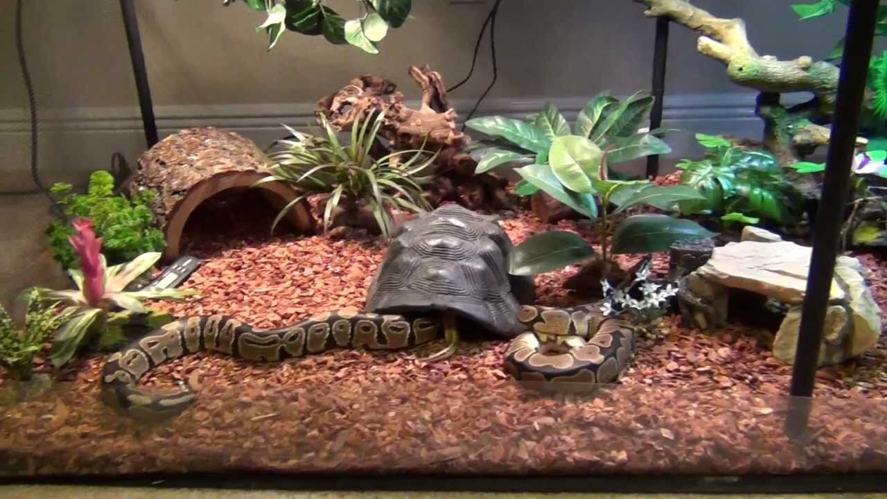 This is a really well done ball python set up. I love the ...