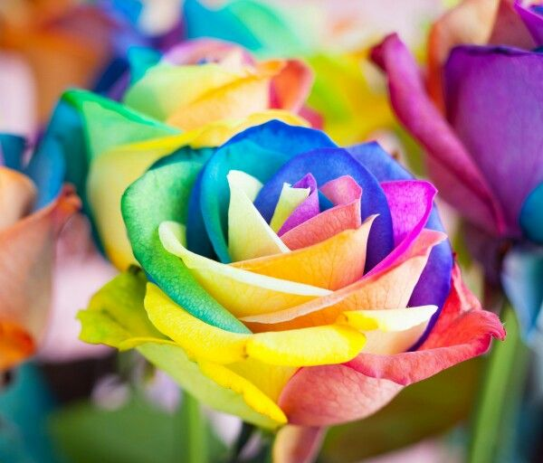 Rainbow Rose 3D Background Wallpaper Only1995