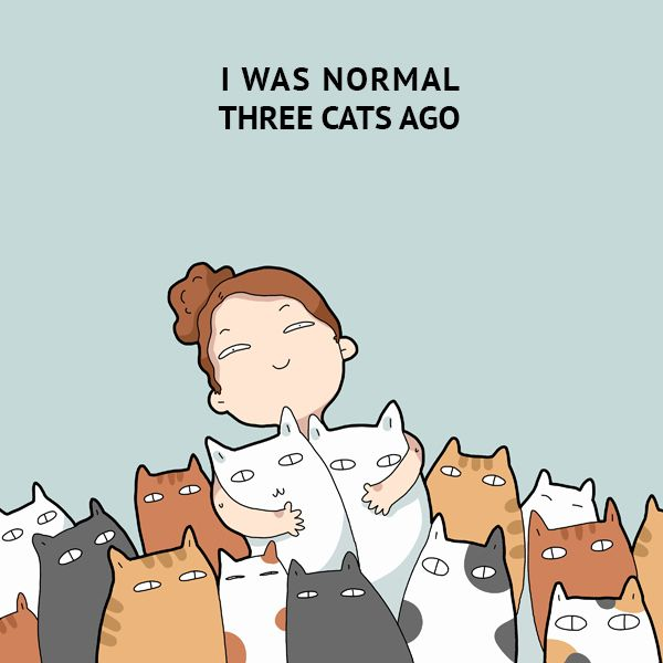 """I was normal three cats ago."" 40 Funny Doodles For Cat Lovers and Your Cat Crazy Lady Friend"