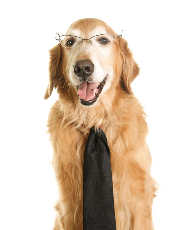 Claude, Sr. Dog Spokesman for the book due in Mar. 2012, Your Dog's Golden Years