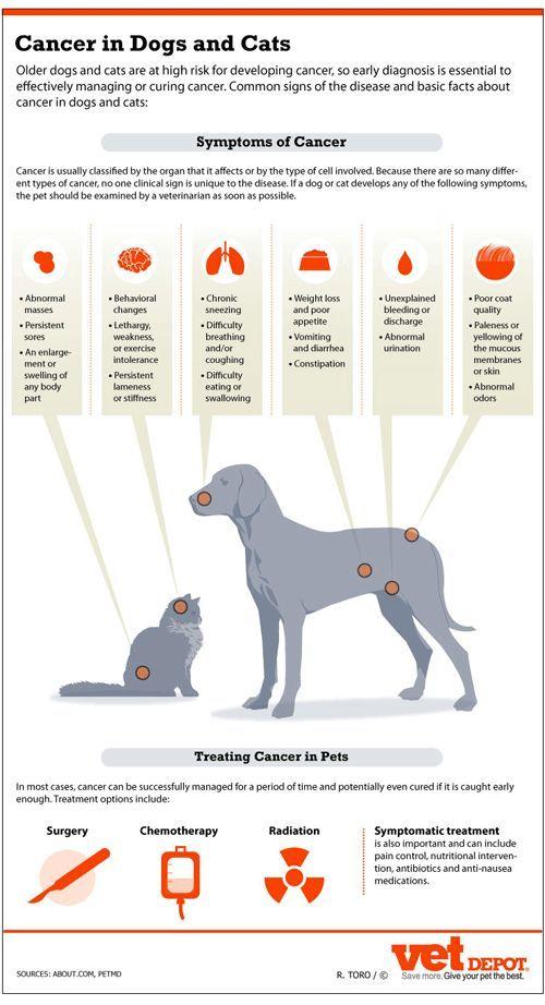 Pin On Vet Medicine