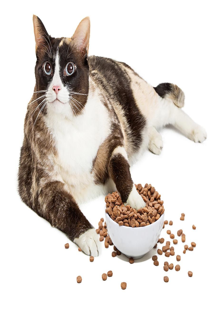 low protein foods for cats