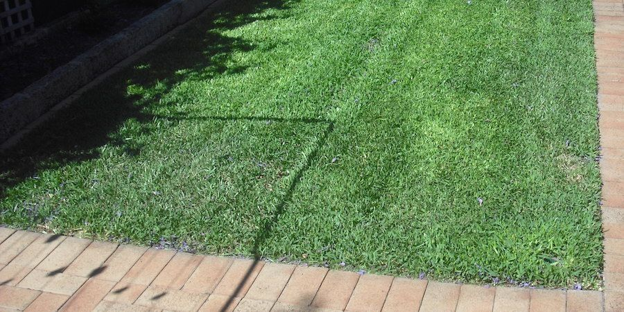 Learn More About Using St. Augustine Grass For Your Lawn