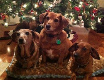 My Dogs Buddy Lulu And Oscar Rhonda Huntsville Al 11 29 13