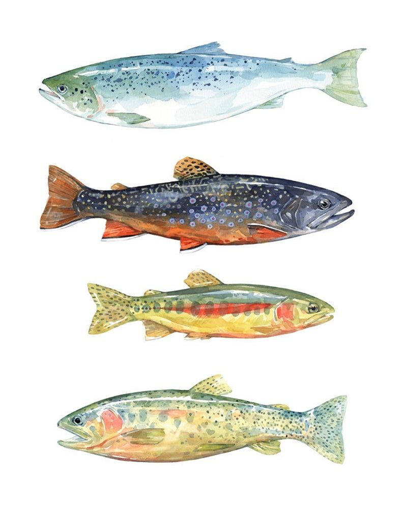 Trout Watercolor Art Print, Fly Fishing Trout Pain