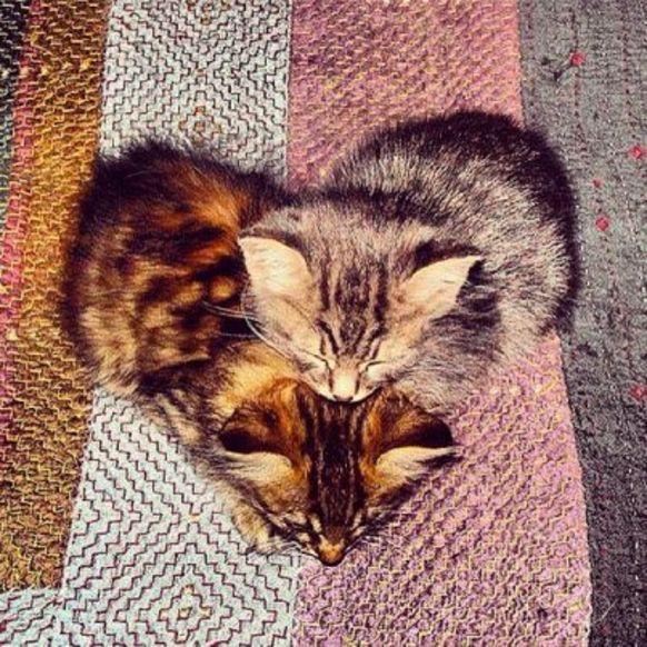 Für einen guten Start in den Morgen: Katzenbilder mit Herz - watson