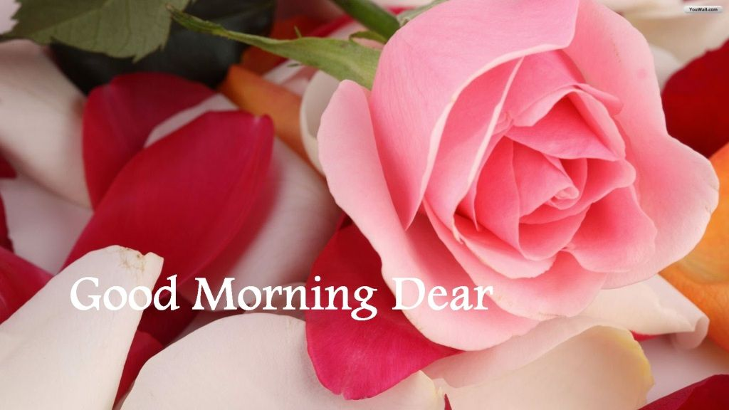 Good Morning Beautiful Pink Roses : Good morning beautiful sms sweet messages