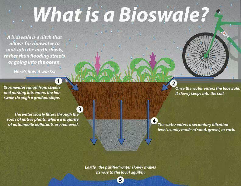 Bioswale Cross Section Better Way To Utilize Rain Water Larc