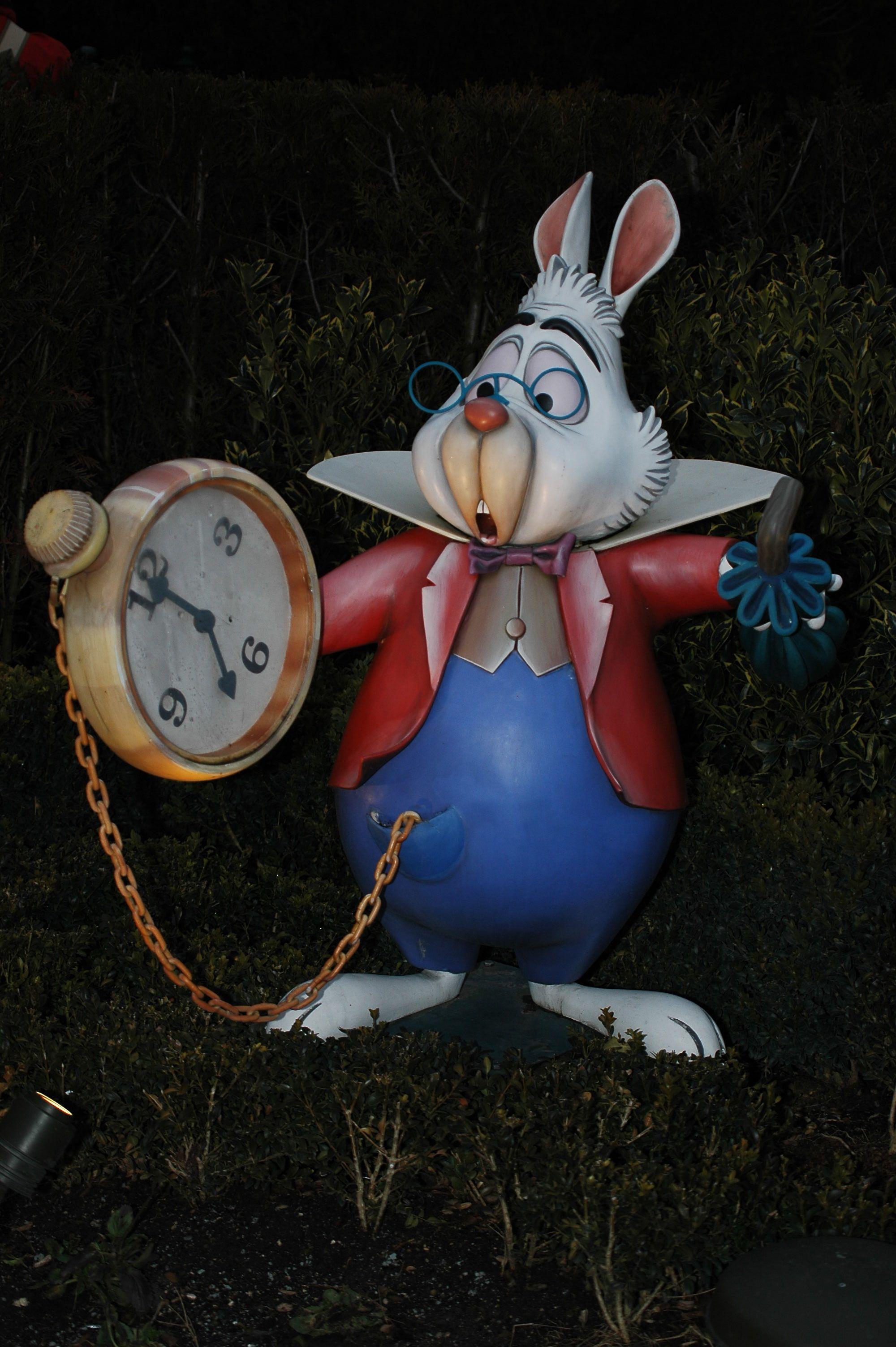 White rabbit   ALICE IN WONDERLAND   Pinterest