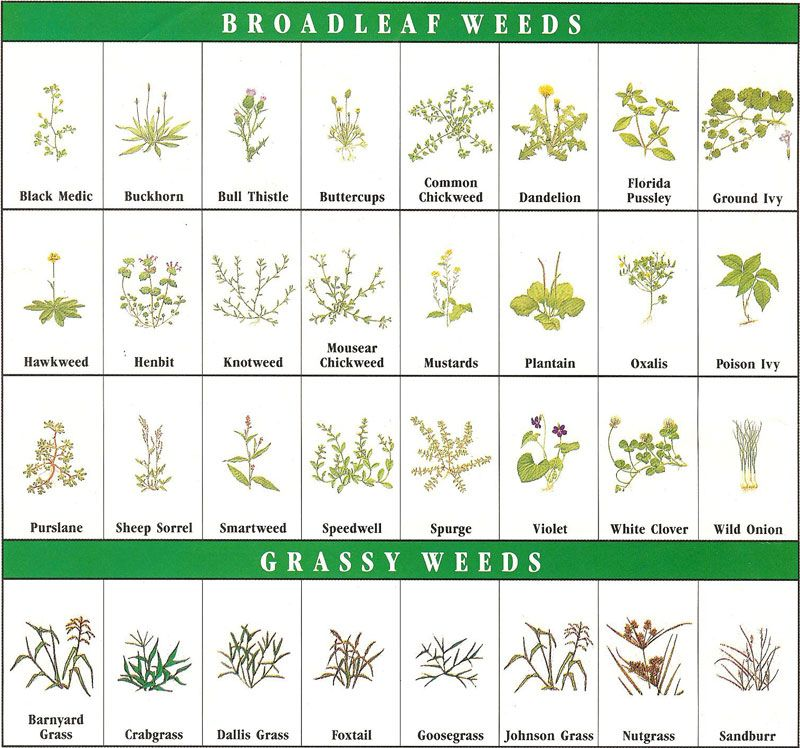 Weed identification garden tips horticulture for Nursery charts