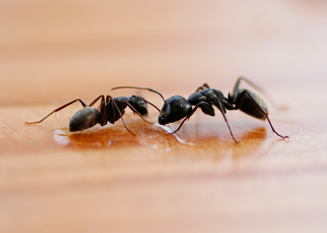 How To Get A Pest Control License In Georgia