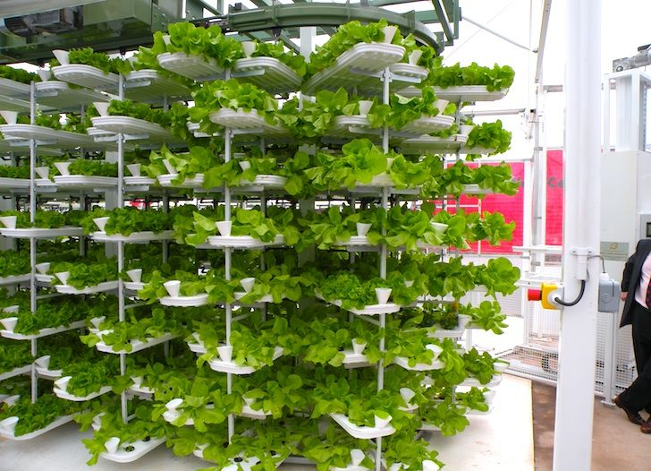VertiCrop Processes 10,000 Plants Every 3 Days Using Vertical Hydroponic  Farming