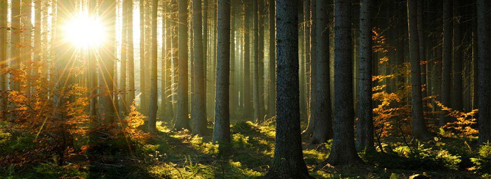 Image result for forest image