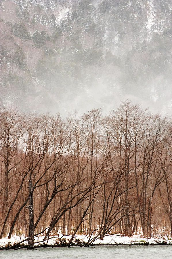 Willow Trees In Winter Willow Tree Tree Photography Winter Trees