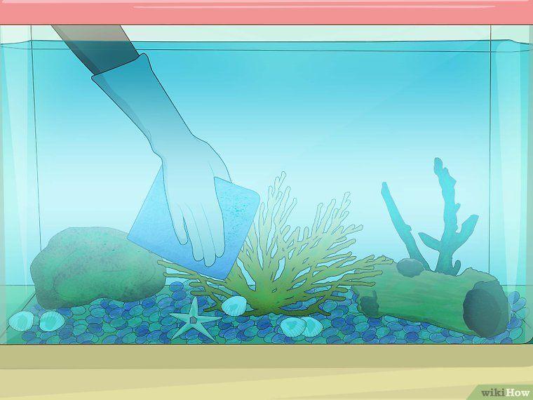 Cómo Limpiar Un Acuario Peces De Agua Dulce Para Acuario Peces De Agua Salada Peces De Acuario