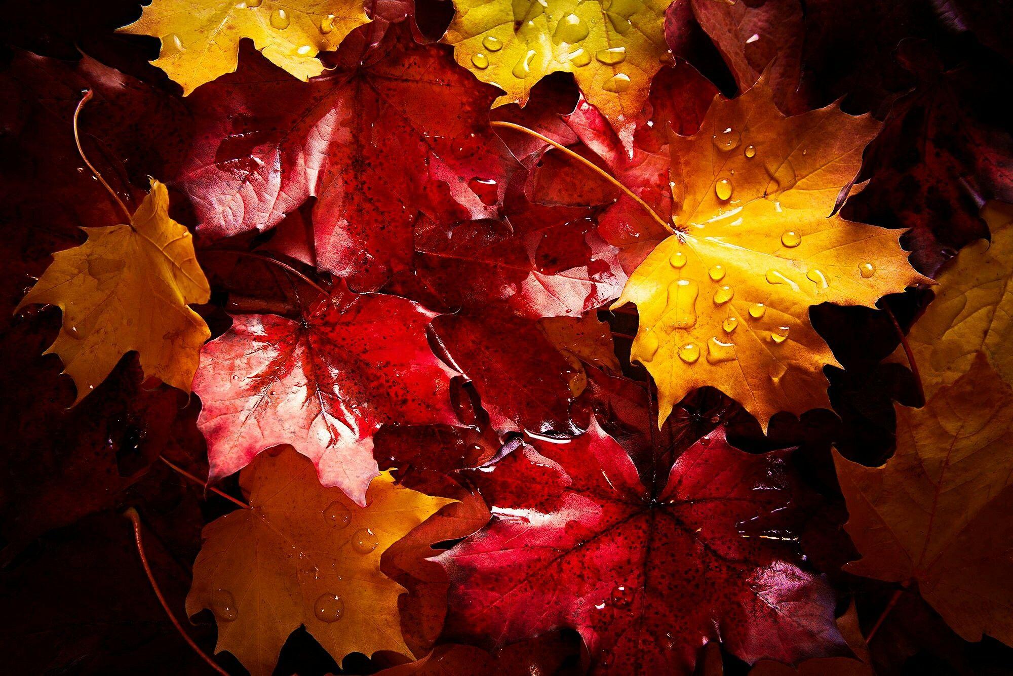 Autumn | Autumn | Pinterest