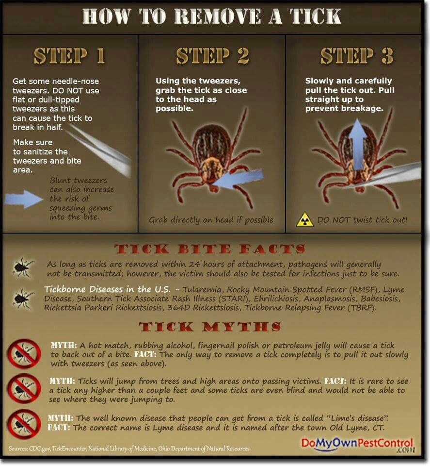 how to check for ticks on black dog
