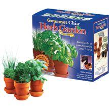Shop By Brand Herb Garden Kit Herb Garden Chia Pet