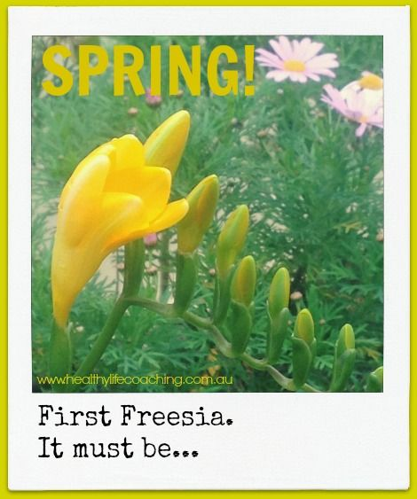 Despite the rain today, the first freesia has just opened.  #ilovespring  Healthy Life Coaching www.healthylifecoaching.com.au  Coaching for Busy Mums