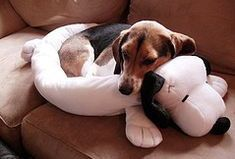 Good Snoopy Beagle Beagle Adorable Dog - 755a05d2d697fbbef134efd356ea83cb  Photograph_702815  .jpg