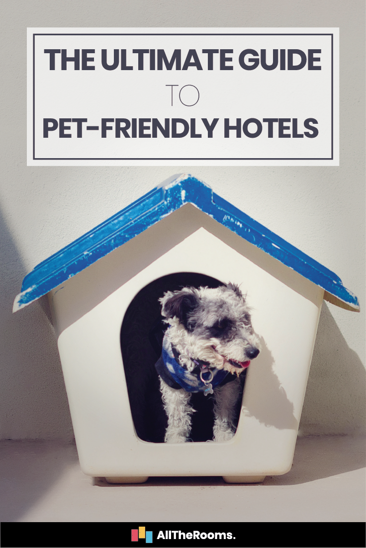The Ultimate Guide to PetFriendly Hotel Chains and Travel