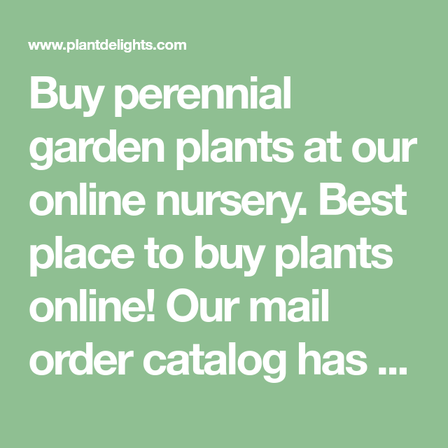 Buy Perennial Garden Plants At Our Online Nursery. Best Place To Buy Plants  Online!