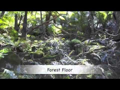 Exploring Life Within Each Of The Rainforest Layers Video And