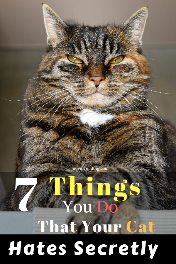 7 Things You Do That Your Cat Hates Secretly In 2020 Cats Pets Cats Animals
