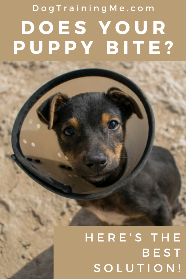 How To Get A Puppy To Stop Biting Puppy Biting Getting A Puppy