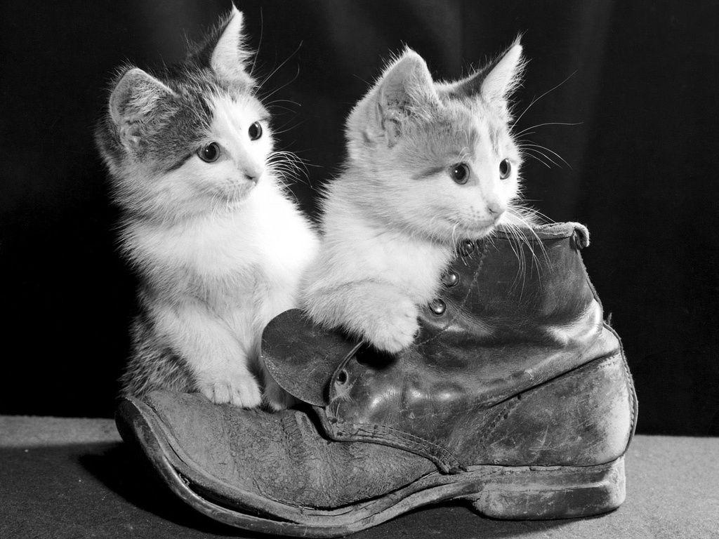 Gatos: umas das minhas paixões ^-^