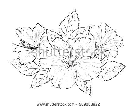 Hibiscus And Lily Flowers Bouquet Garland Composition Isolated