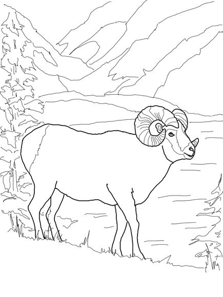Argali Mountain Sheep Coloring Page Coloring Pages Bird