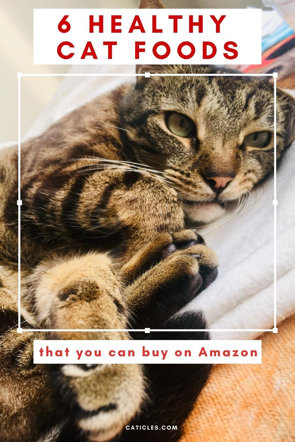 6 good quality cat food options on amazon 2020 guide in