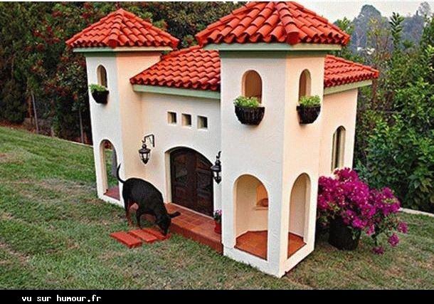 Maison pour chiens