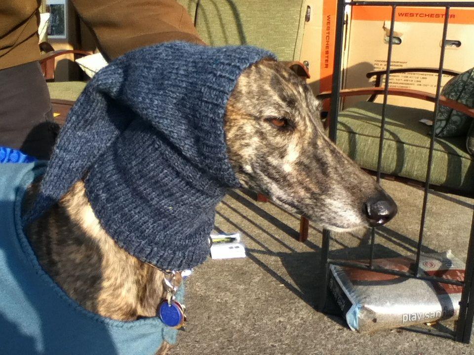 Ravelry: Pointy Greyhound Hood by Nikki Atkins