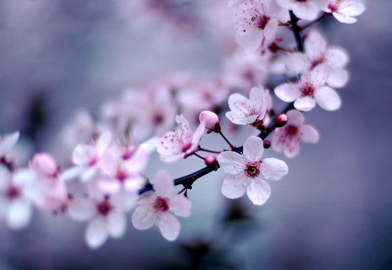 5 Dinge, die wir am Frühling lieben!