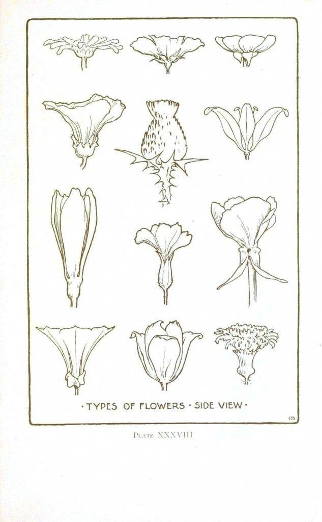 Botanical – Flower – Flower line drawings | Vintage Printable at  Swivelchair Media – Beta
