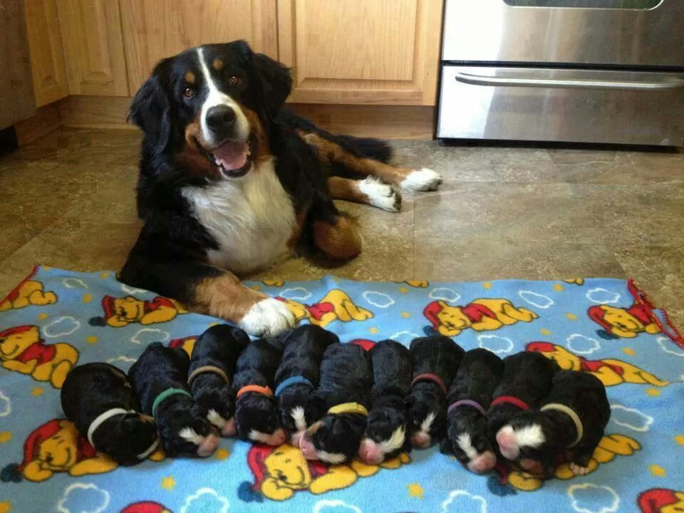 Mamãe e seus bebezinhos.