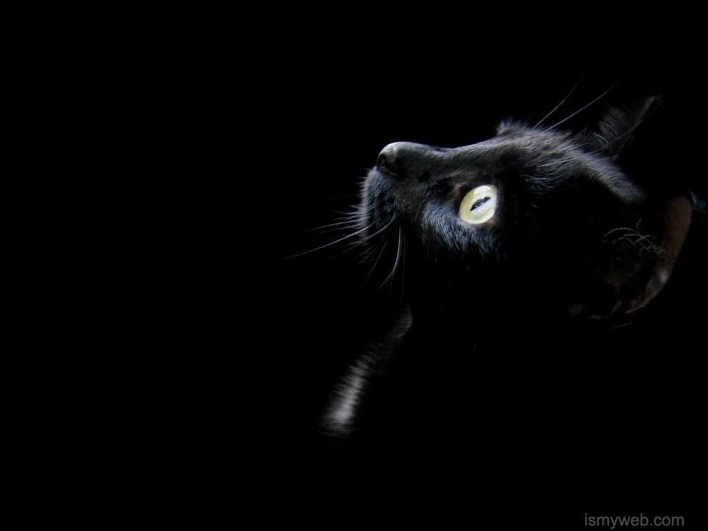 Hd Black Cat Computer Wallpaper Download 3 Black Cat Cats I Love Cats