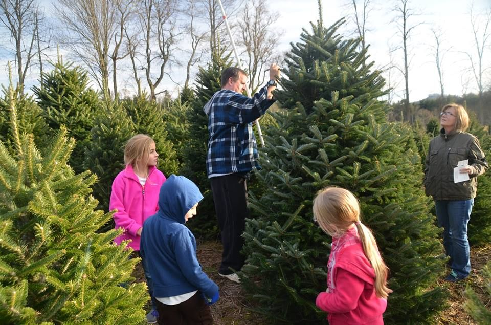 The 15 Best Christmas Tree Farms in America! | Cool ...