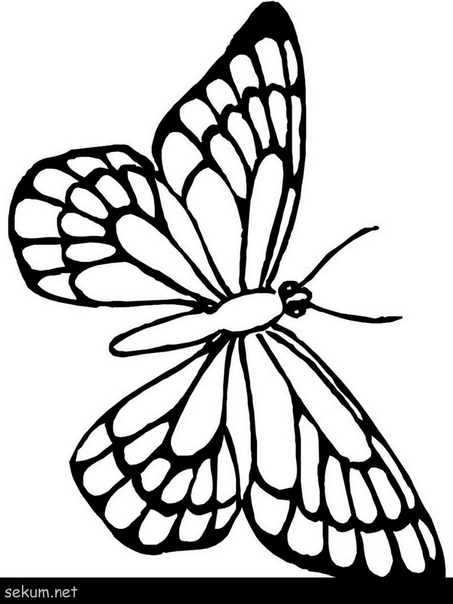 Butterfly Wing Coloring Page Youngandtae Com Butterfly Coloring Page Love Coloring Pages Butterfly Outline