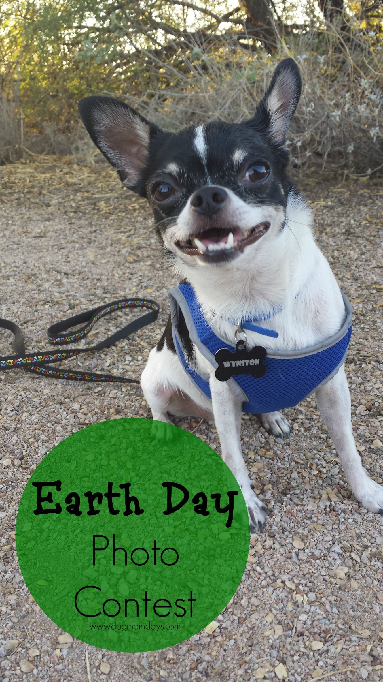Earth Day Photo Contest And Giveaway Cool Pets Cute Dogs Dog